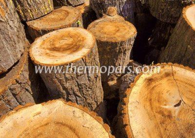 نوع چوب درختان